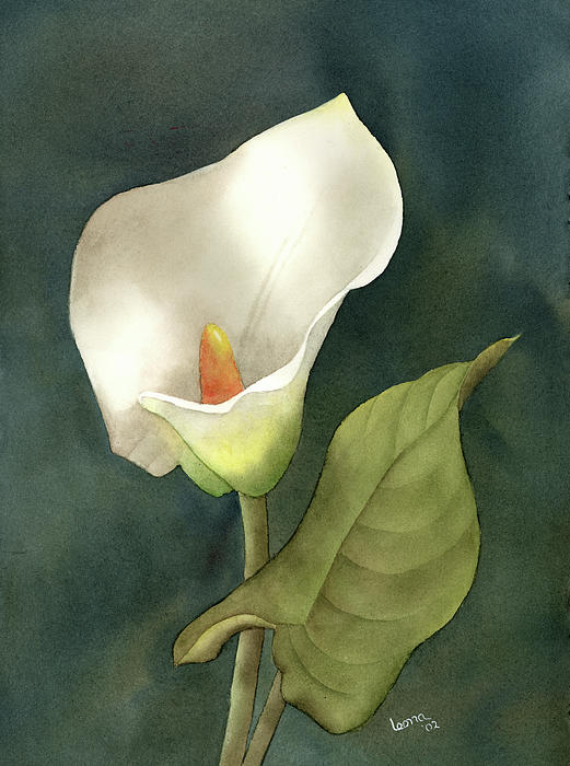 Calla Lily Paintings Sale