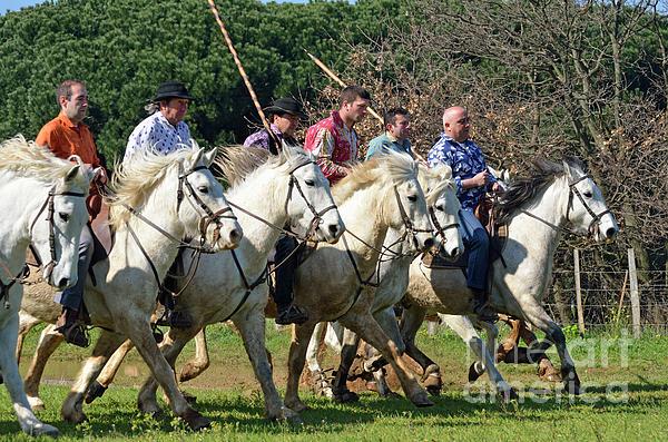 Adult Photograph - Camargue Cowboys Riding Horses by Sami Sarkis