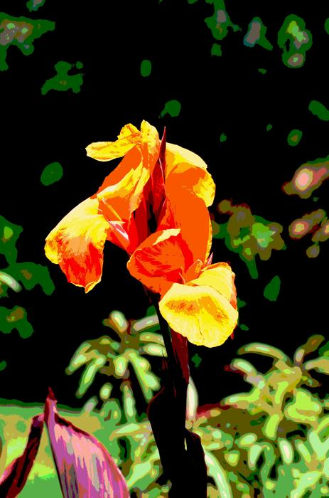 Flower Mixed Media - Canna In Summer by Dorrie Pelzer