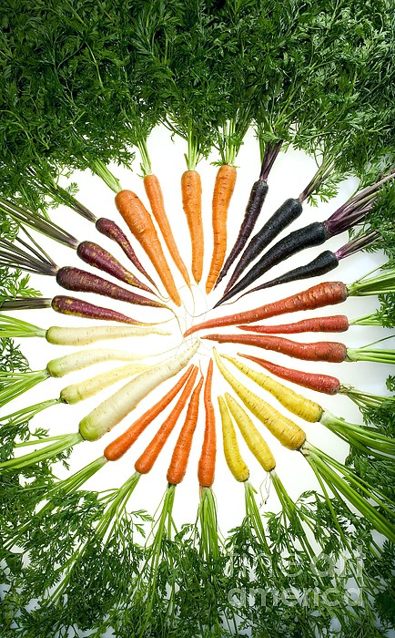 Agriculture Photograph - Carrot Pigmentation Variation by Science Source