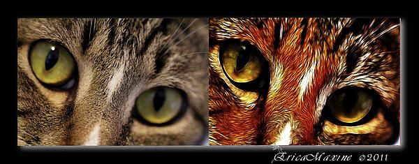 Ericamaxine Photograph - Cat Eyes by EricaMaxine  Price