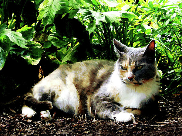 Cat Photograph - Cat Relaxing In Garden by Susan Savad