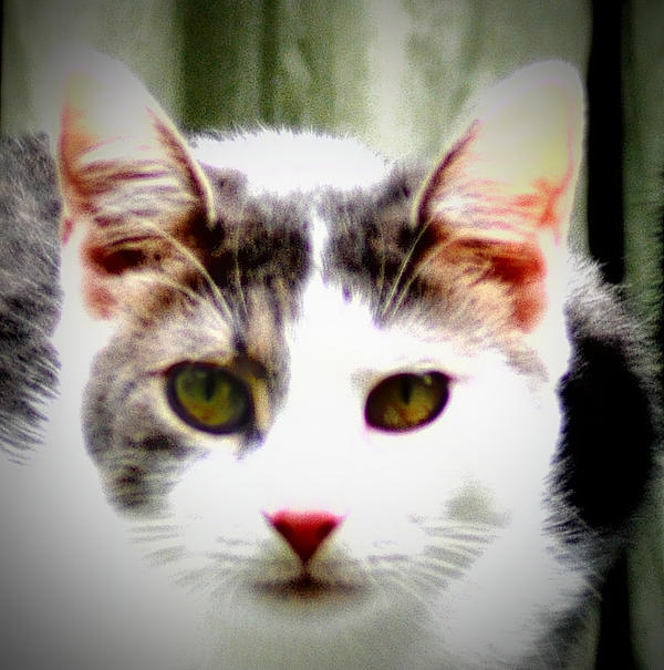 Cat Photograph - Cats Meow by Bill Cannon