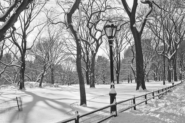 Central Park Photograph - Central Park Snowfall Bw by Andrew Kazmierski