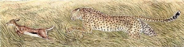 Cheetah Drawing - Cheetah And Gazelle Fawn by Tim McCarthy
