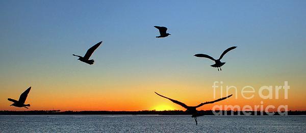 Sunrise Photograph - Circle Meeting At Sunrise by Benanne Stiens