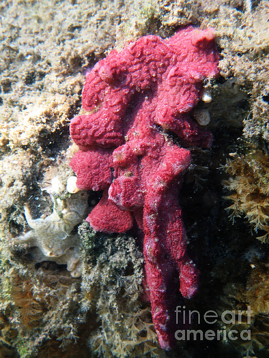 Underwater Photograph - Close-up Of Live Sponge by Ted Kinsman