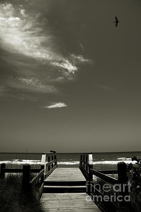 Beach Photograph - Coconut Point Beach Fl by Susanne Van Hulst