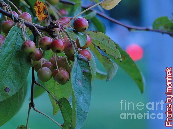 Flowers Photograph - Color Me Good by Iman Trek