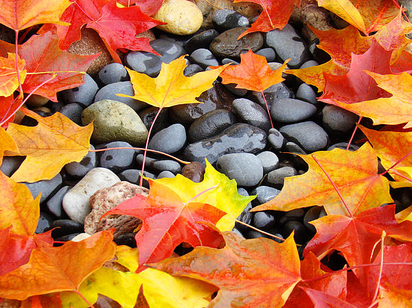 Autumn Photograph - Colorful Autumn Leaves Prints Rocks by Baslee Troutman