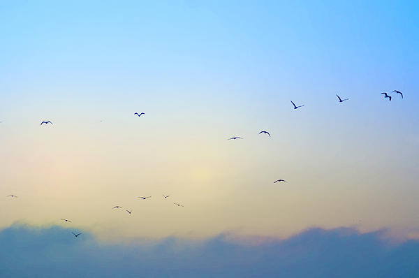 Bird Photograph - Come Fly With Me by Bill Cannon