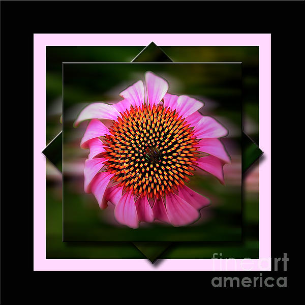 Color Photography Photograph - Coneflower Geometric by Sue Stefanowicz