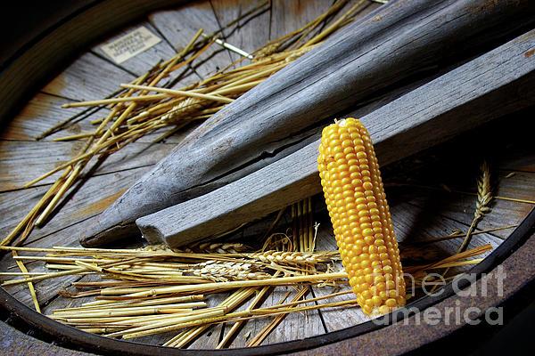Autumn Photograph - Corn Cob by Carlos Caetano