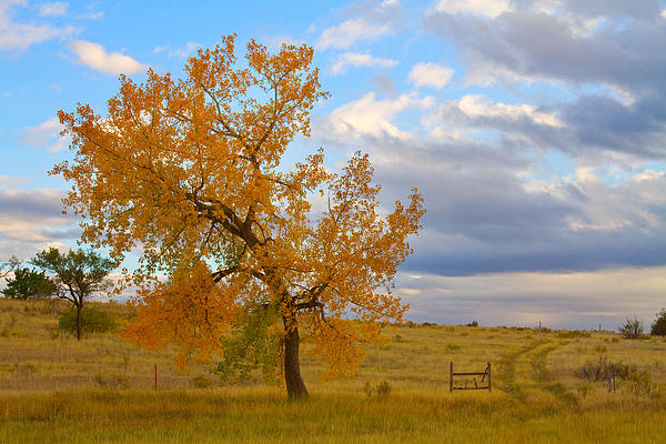 Country Photograph - Country Autumn Landscape by James BO  Insogna