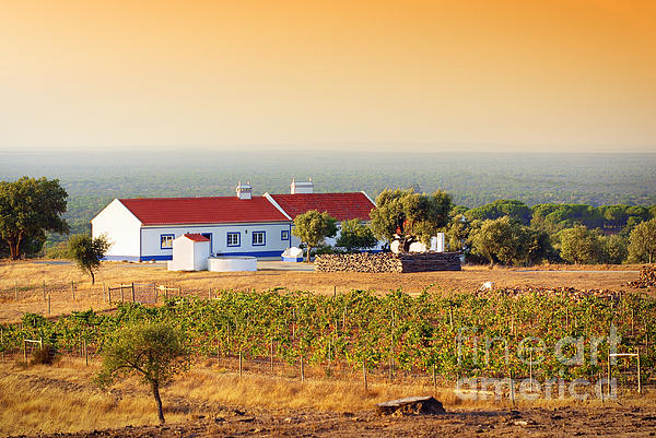 Agriculture Photograph - Countryside House by Carlos Caetano