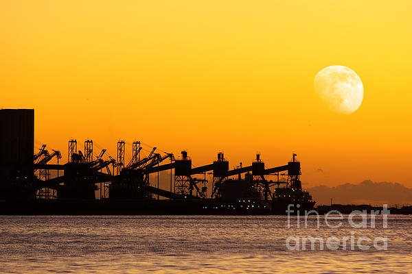 Atmosphere Photograph - Cranes At Sunset by Carlos Caetano