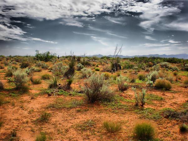 Desert Photograph - Desert Of New Mexico by Thomas  MacPherson Jr