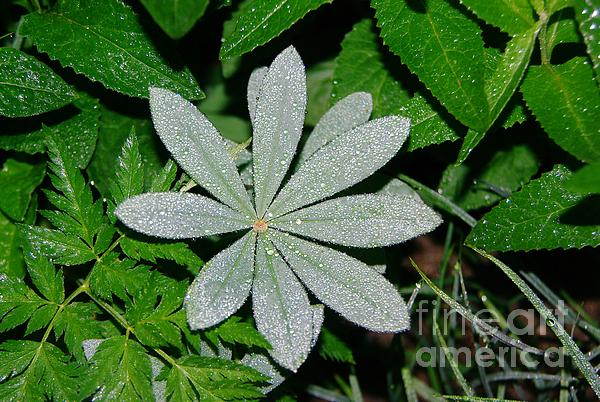 Dew Photograph - Dew Drops In The Morn  by Jeff Swan