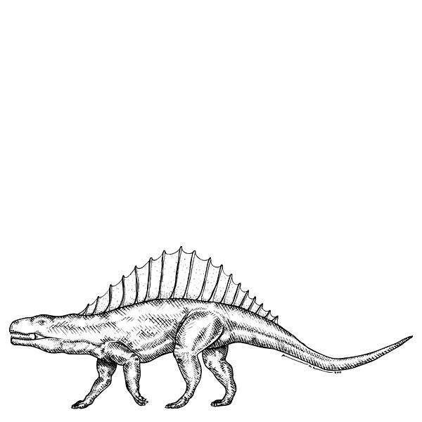 Cartoon Drawing - Dimetrodon - Dinosaur by Karl Addison