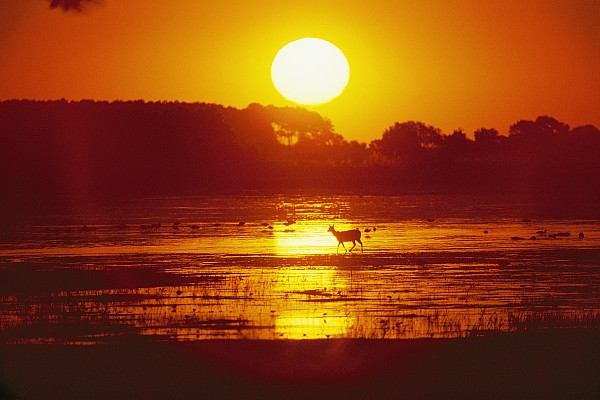 Animals Photograph - Distant Deer Silhouetted In A Marsh by Amy White & Al Petteway