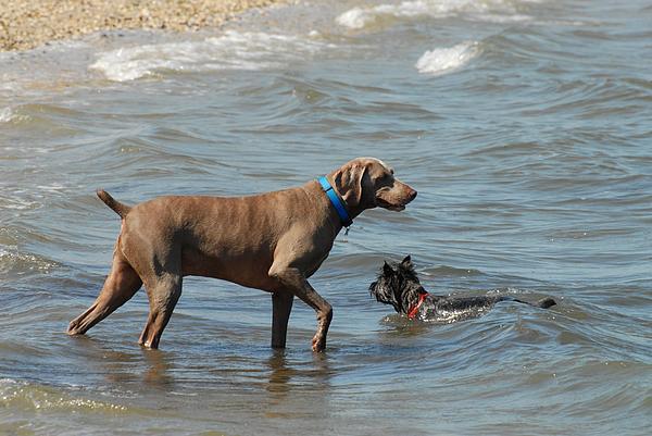 Dogs Photograph - Dogs 21 by Joyce StJames