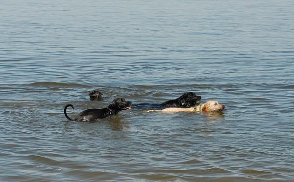 Dogs Photograph - Dogs 32 by Joyce StJames