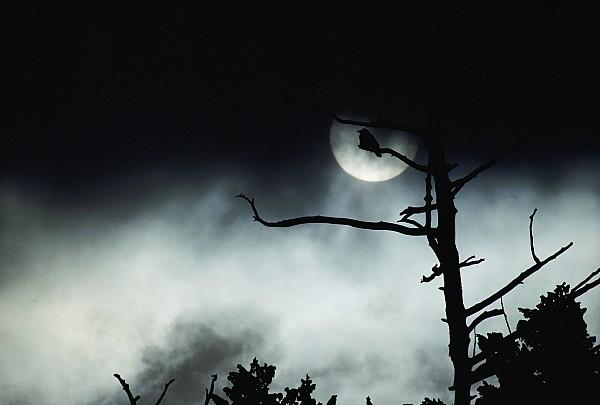 North America Photograph - Dramatic Scene Of A Dead Tree by Michael S. Quinton