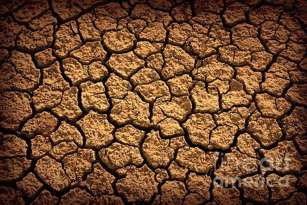 Agriculture Photograph - Dried Terrain by Carlos Caetano