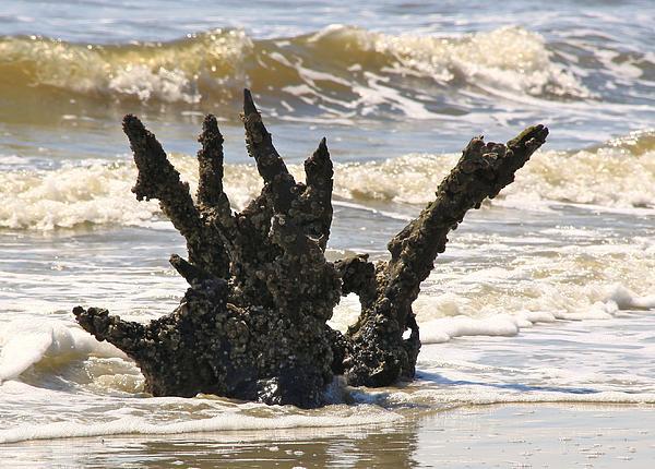 Driftwood Photograph - Driftwood Dragon by Jim Ziemer