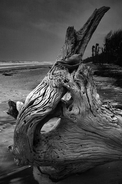Botany Bay Photograph - Driftwood On Beach by Steven Ainsworth