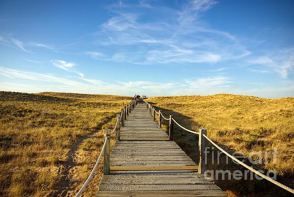 Abstract Photograph - Dune Walkway by Carlos Caetano