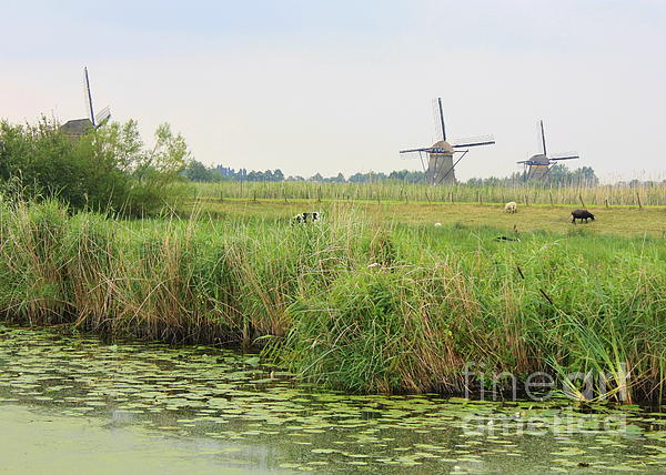 Dutch Landscape Photograph - Dutch Landscape With Windmills And Cows by Carol Groenen