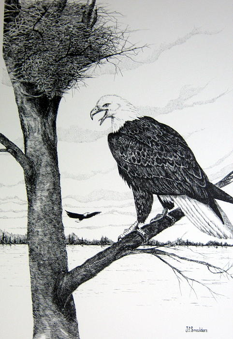 Eagle At Nest Drawing by John Smeulders