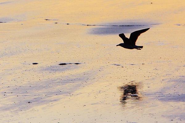 Maine Photograph - Early Morning Flight by Rick Berk