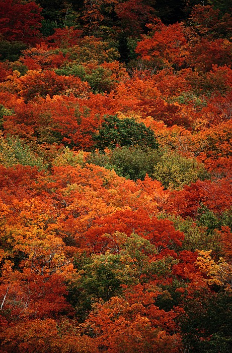 North America Photograph - Elevated View Of Autumn Foliage by Raymond Gehman