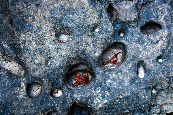 Eroded Rocks Photograph - Eroded Rock With Dried Leaves by Jennifer Bright