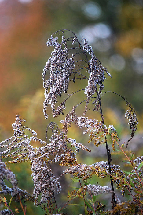 Nature Photograph - Fading Color by Kimberly Deverell