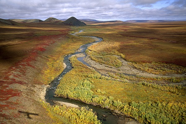 Outdoors Photograph - Fall Color On The Central North Slope by Joel Sartore
