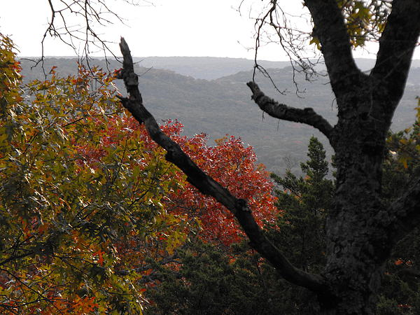 Texas Fall Picture Photograph - Fall Picture In Texas by Rebecca Cearley