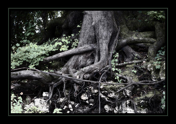 Cypress Tree Pastel - Fantasy Roots by Linda Olsen