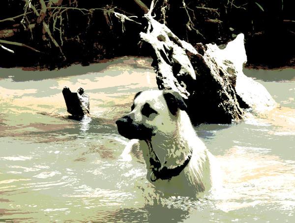 Dog Digital Art - Favorite Swimming Hole by Dorrie Pelzer