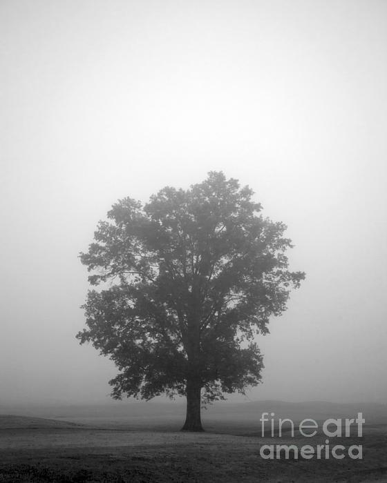 Tree Photograph - Feeling Small by Amanda Barcon
