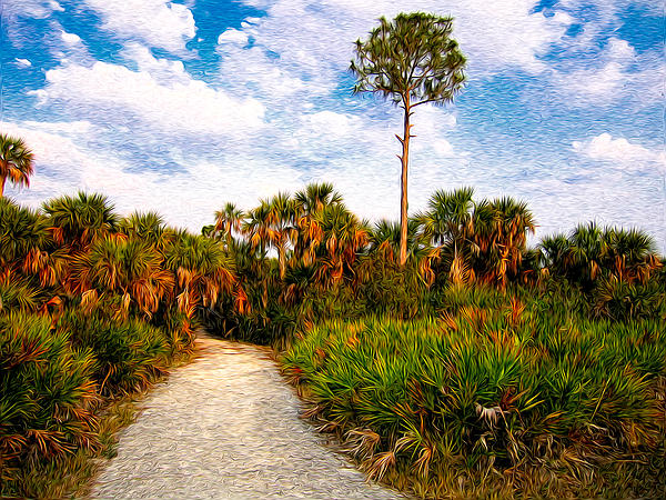 Palm Photograph - Feels Like Home by Rich Leighton