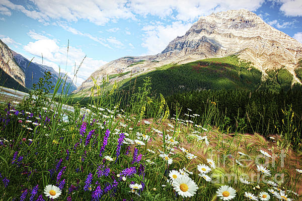 Adventure Photograph - Field Of Daisies And Wild Flowers by Sandra Cunningham