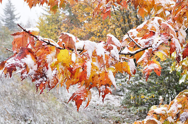 West Virginia Photograph - First Snow by Thomas R Fletcher