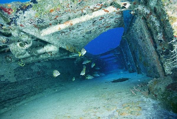 Atlantic Islands Photograph - Fish Swimming In Shipwreck, Tortola by Joe Stancampiano