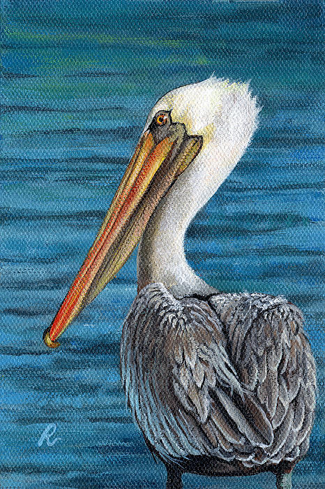 Pelican Painting - Florida Pelican by Peggy Dreher