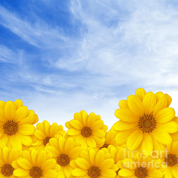 Background Photograph - Flowers Over Sky by Carlos Caetano
