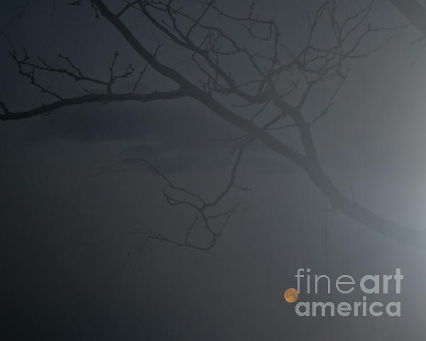 Fog Photograph - Foggy Morn In Fort Collins by Harry Strharsky