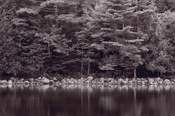 Maine Photograph - Forest At Jordan Pond Acadia Bw by Steve Gadomski